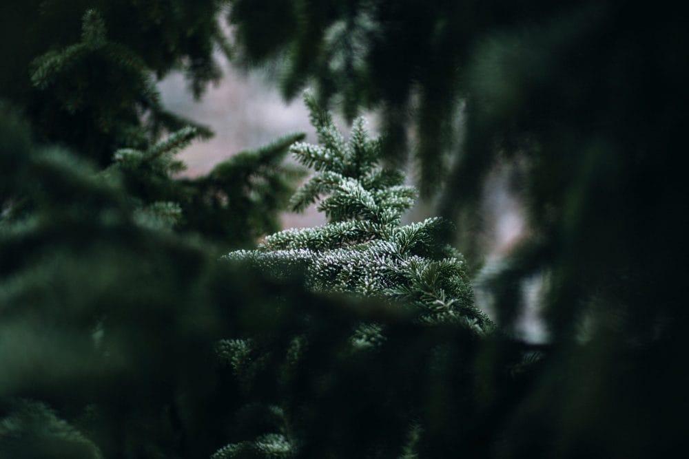 Święta dla mnie już nie są takie same…